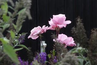 Blumen, Blüten - flowers and blossoms, serie ,   76342/10291
