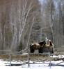 _DSF3751 (Vladimir Gazoukin) Tags: canada country winter vladimirgazoukin trees simcoe snow bokeh horses