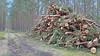 20180331_172452 (wos---art) Tags: bildschichten schneebruch sturmbruch äste bäume aufräumen haufen
