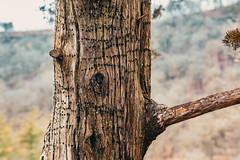 Chimney Rock Trail in Spring, Whitewater State Park (Tony Webster) Tags: chimneyrocktrail march minnesota whitewaterstatepark bokeh spring statepark tree treebark saintcharles unitedstates us