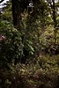 我的熱帶雨林。My Rain Forest. (ORANGEREPUBLIC) Tags: mitakon50mmf095 beautifulbokeh photoshopexpress iso100 dreamlikeadream photoeditor dof blur sonya7r2 寫真 orangerepublic natural 佛系攝影 manualfocus f095