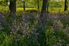 Im Wald da sind nicht nur Räuber! (reinerkuentzler) Tags: wald blumen leica vlux farbe