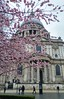 St. Paul's Sakura (Toni Kaarttinen) Tags: uk unitedkingdom gb greatbritain britain london england المملكة المتحدة regneunite vereinigteskönigreich britio reinounido isobritannia royaumeuni egyesültkirályság regnounito イギリス verenigdkoninkrijk wielkabrytania regatulunit storbritannien anglaterra tinglaterra englanti angleerre inghilterra イングランド engeland anglia inglaterra англия londres lontoo londra ロンドン londen londyn лондон stpaul cathedral church hanami sakura cherry blossolms blossoms