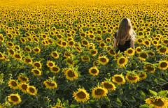 Flowers Of Sun (CoolMcFlash) Tags: sunflower field woman nature summer person flower sonnenblume feld frau natur sommer fotografie photography fujifilm xt2 xf18135mmf3556r lm ois wr yellow gelb