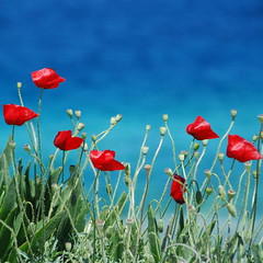 (akiruna) Tags: poppies red blue sea bokeh flowers wildflowers akiruna annemiehiele