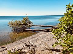 Lake escape (Sammarioana) Tags: fallen tree summer lake sand green vibrant sky color colorful inside ocean water