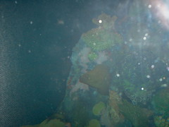 Eel (Adventurer Dustin Holmes) Tags: 2005 springfield missouri ozarks springfieldmo greenecounty indoor underwater reef water animal rock coral eel greeneel