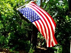 Stars and stripes forever! (Maenette1) Tags: starsandstripes flag fourthofjuly backyard menominee uppermichigan flicker365 allthingsmichigan absolutemichigan projectmichigan nikoncoolpixl22camera