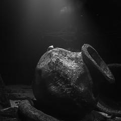 The stage is yours (Fujibert) Tags: beschnitt quadratisch krebs schwarzweis veranstaltung unterwasser tier stil krug randersregnskov objekt animal crab crop event jug square style underwater blackwhite bw sw flickr sliderssunday hss