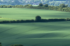 The Vale of Aylesbury, from Dunstable Downs (stephengg) Tags: vale aylesbury beds bucks bedfordshire buckinghamshire dunstable downs field crops trees green landscape