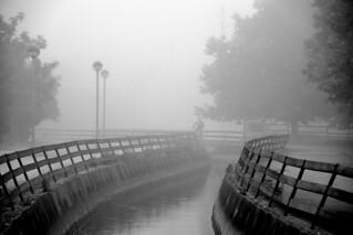Foggy cyclist