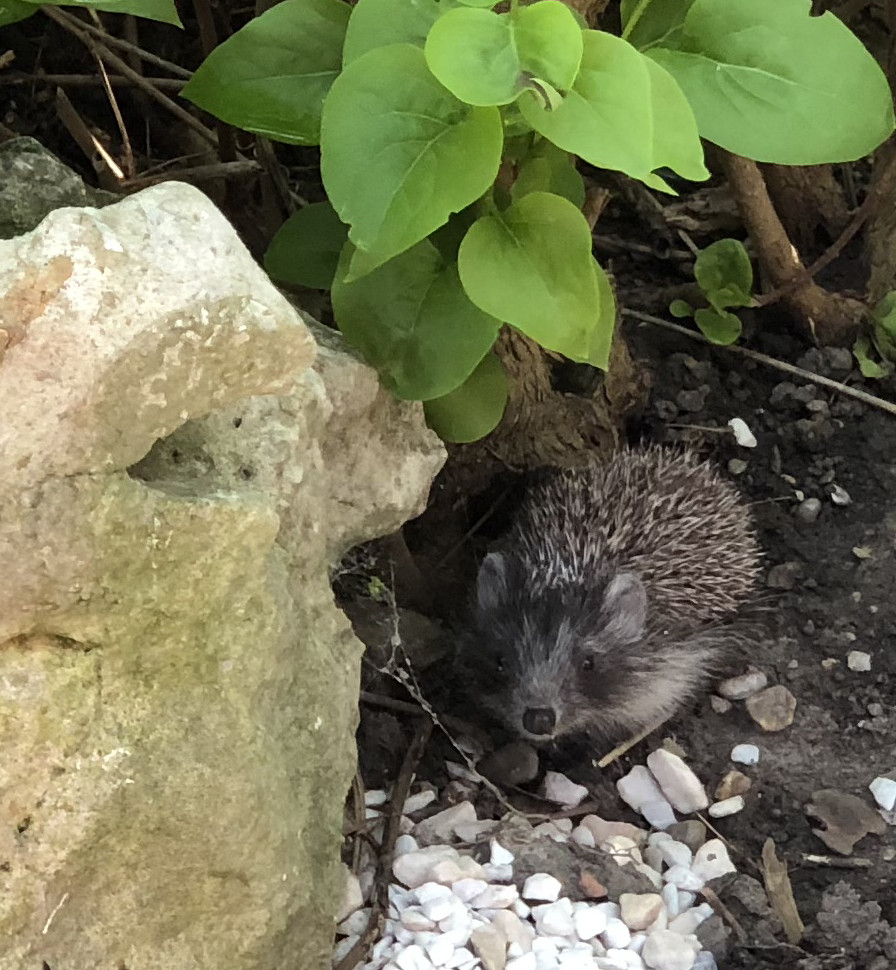 The Worlds Best Photos Of Garten And Igel Flickr Hive Mind