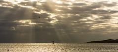 a memory from the past / sky is laughing with you (Özgür Gürgey) Tags: 169 2013 50mm d7100 gürpınar nikon bird clouds rays sea sky istanbul