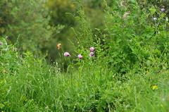 642 - Bastia au bord de la lagune (paspog) Tags: bastia corse corsica france mai may 2018 lagune fleurs blumen flowers