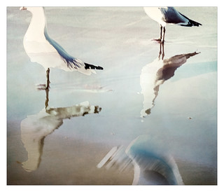 seagull abstract