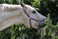 Jacky Boy (excellentzebu1050) Tags: livestock horse outdoor animal animalportraits farm tree coth5