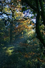 In the Park... (vmribeiro.net) Tags: geo:lat=4155484268 geo:lon=837587357 geotagged cachada portugal prt senhora da rocha braga parque bom jesus sony a350 forest park tree animal sky