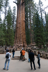 General Sherman (VoLGio) Tags: sequoia secuoya sequoianationalpark giantsequoia generalsherman generalshermansequoia generalshermangiantsequoia gianttree trees arboles arbolesgigantes secuoyasgigantes california nationalpark parquenacional parquenacionaldelassecuoyas usa us estadosunidos unitedstates sony nex6 1650 sony1650 sonynex6