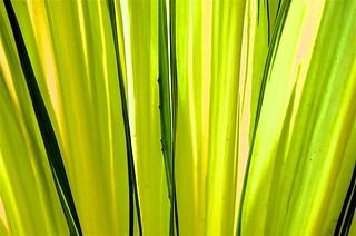 Gradient in Yellow & Green