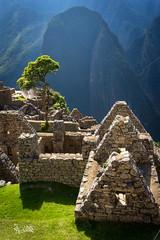 2018 The golden light of Machu Picchu (jeho75) Tags: sony ilce 7m2 zeiss peru south america machu picchu golden light goldenes licht gegenlicht anden