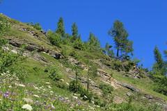 nature (bulbocode909) Tags: valais suisse ovronnaz montagnes nature paysages arbres fleurs prairies vert bleu