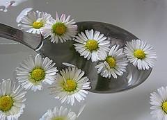 daisies (majka44) Tags: daisies water yellow macroshot macro macroworld light creation lifestyle white