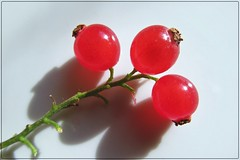 the last three... (green_lover (I wait for your COMMENTS!)) Tags: redcurrants currants fruits macro smileonsaturday redroundtrio food red three frame white shadow