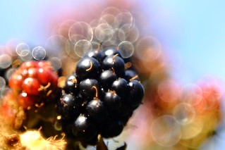 Berries, MOG Domiplan @f2.8 this is why it is so soft :(