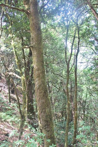 Національний парк Гарахонай, Гомера, Канарські острови  InterNetri  0697