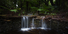 Hidden Gems (Grant Grieve. Off the grid.) Tags: bowenfalls track cascade waterfall bush forest water rain stream green trees plants rocks roots leaves milford sound milfordsound