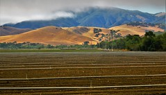 July15Image0555 (Michael T. Morales) Tags: agriculture salinasvalley farm plant cultivation rowfarm green