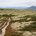 The mountain track (K. Haagestad) Tags: rondane mountains nature landscape sky clouds snow tracks moss
