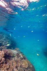 Underwater Heron Island-18 (Quick Shot Photos) Tags: australia canon canoncollective greatbarrierreef heronisland queensland underwater bogie au