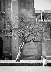 Blanca plegaria y sin sombra (Marcos Núñez Núñez) Tags: plegaria árbol tree streetphotography oaxaca catedral bw streetphotographer mexico urban blackandwhite rezo calle monochromatic fotografiacallejera blanco