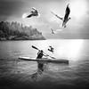 Serenity Island (jktreed) Tags: birds blackandwhite bw kayak ocean island spring divine light water oslo norway