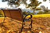 Sunrise from Sydney (600tom) Tags: trees awseome bench beauriful goldenlight sunrise sydneyharbourbridge sydney