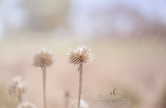 Some Fun in the Spring Cold (Rrea Brown (Photography)) Tags: helios bokeh weeds