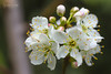 Dia 209 (gedaesal) Tags: whiteflower closeup nopeople canon700d macrodreams