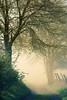 early morning surprise (Rita Eberle-Wessner) Tags: tree trees baum bäume cherrytree chrerrytrees kirschbäume wildkirsche baumblüte floweringtree nebel fog weg path zaum fence feldweg morning morgennebel foggy white golden weis gold