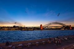 雪梨港灣大橋 Sydney Habour Bridge (chungmuwei) Tags: sydney sunset river d7100 hdr australia bird sydneyharbourbridge sky blue dark nature city nikon sigma widelens 10mm lowlight lightroom