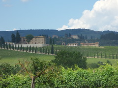 Cecchi wine tasting and tour - field of vines (ell brown) Tags: italy italia tuscany toscana cecchi localitàcasinadeiponti castellina chianti villacerna foresteriavillacerna winery winetasting wine wines stradaprovincialedicastellinainchianti field tree trees vineyard