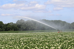 If the rain does not come, then, artificial! (excellentzebu1050) Tags: field crops artificial spraying farm fieldwork crop maize potatoes coth5