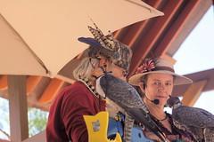 raptor5 (Moyer566) Tags: people falconry falconer renfair renfaire bristol renaissancefaire flightoftheraptors wisconsin travel getout adventure canon 50d corel paintprox5 photography explore