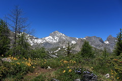 la Dent Favre (bulbocode909) Tags: valais suisse ovronnaz grandgarde dentfavre montagnes nature fleurs arbres mélèzes rochers sentiers neige paysages vert bleu jaune petitmuveran