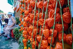Chinese lantern plant (shinichiro*@OSAKA) Tags: 20180709sdim4088 2018 crazyshin sigmasdquattroh sdqh sigma1770mmf284dcmacrohsm july summer asakusa tokyo japan jp ほおずき市 28546526867 candidate
