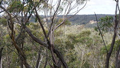 view to rail and cuttings (spelio) Tags: mt victoria nsw blue mountains australia winter bushwalk hike