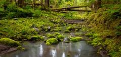 Small Mossy Creek (rich trinter photos) Tags: ipsutcreekcampgrounds mountrainier ashford washington unitedstates us moss mossyrocks landscape northwest trinterphotos richtrinter