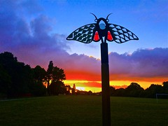 Whitby Park (TERRY KEARNEY) Tags: sunrise sun cloud sky silhouette tree trees fields grass insect bee buildings canoneos1dmarkiv cheshire daylight day explore europe england ellesmereportcheshire flickr kearney skyline skies landscape nature oneterry outdoor sunshine terrykearney wildlife whitbypark weather whitbyparkellesmereport 2018 sunset park forest