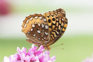 Butterfly 2018-60