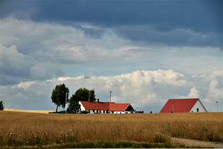 Landscape near Skurup - Sweden (8080)